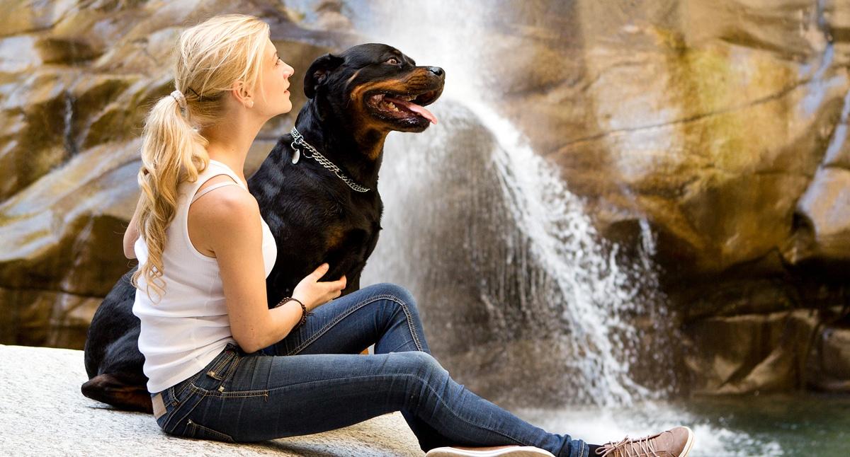 Freizeit mit dem Hund