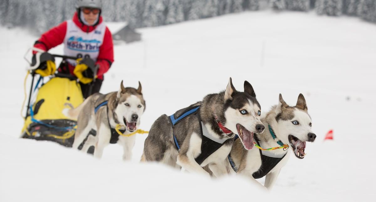 Tipp | Hunde im Schnee, perfekt ins Bild gesetzt
